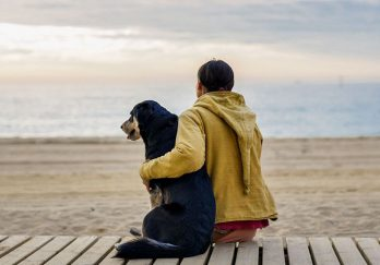 Dog and woman setting on beach
